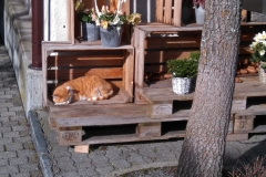 The red cat sleeping in the sun in winter