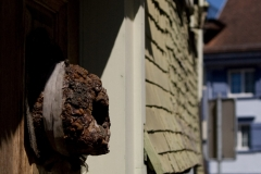 The wasp nest like a guard