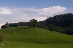 Etude with hills and cows