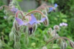 A flying flower