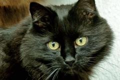 A portrait of our beloved cat Gosha