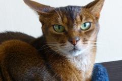 Portrait of Joy, the cat